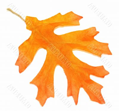 Orange Fall Oak Leaf Over White