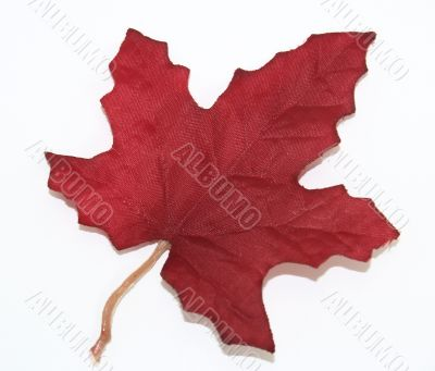 Red Canadian Maple Leaf Over White