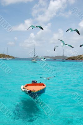 boat sea birds