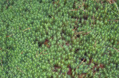 moss-grown