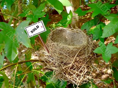 bird nest - real estate 4