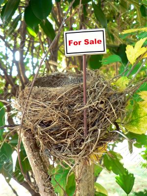 bird nest - real estate 7