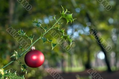 red ball on holly tree