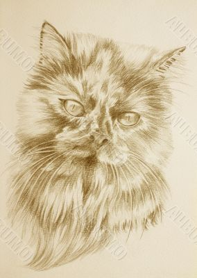 Persian sepia portrait