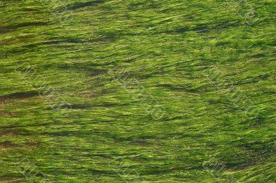 Flowing weeds