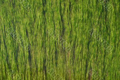 Weeds flowing