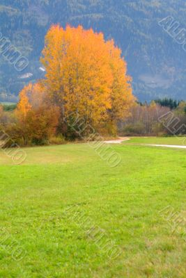 autumn tree and meadow
