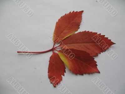 a decorative vines leaf