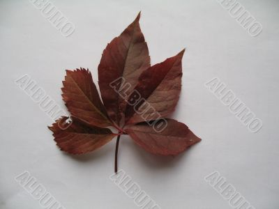 a decorative vines leaf