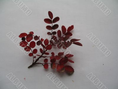 a decorative branch of rose