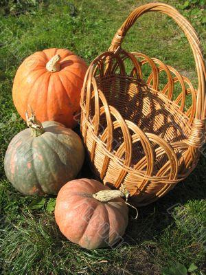 Yellow Basket and Three Pumpkins