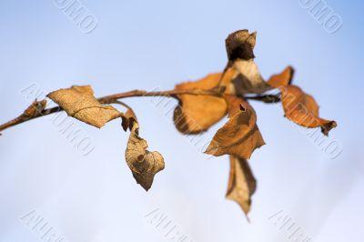 Dry autumn branch