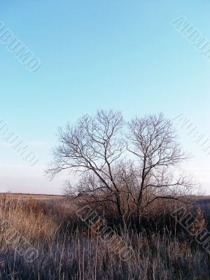bare tree in the field