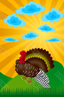 Turkey. Day of thanksgiving. The vector image.