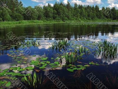 marsh edge lake