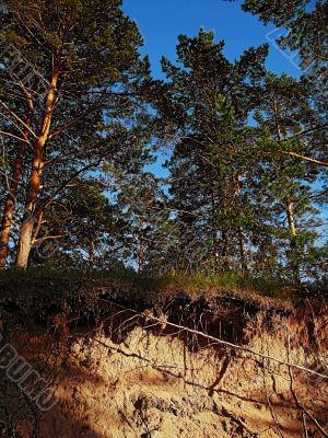 pines on breakaway