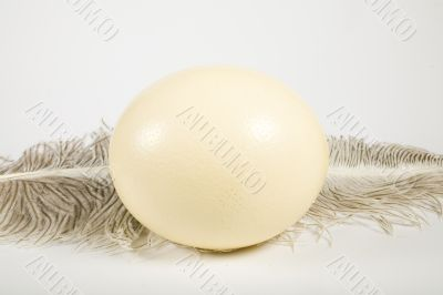 Huge ostrich`s egg and feather
