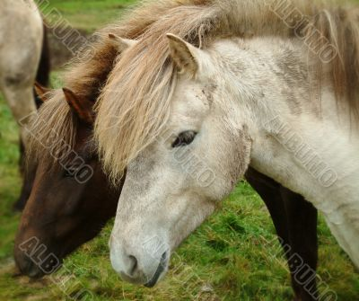 Horses: Black & White
