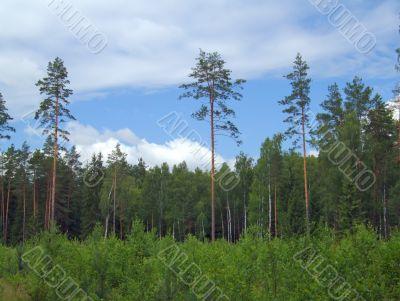 Margin of a wood
