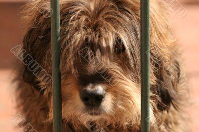Cute hairy dog