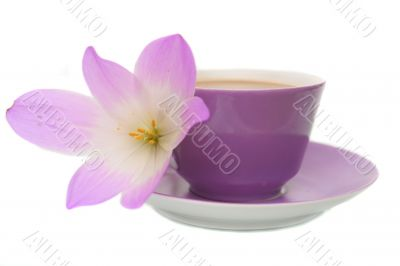 The lilac flower and cup from coffee are isolated