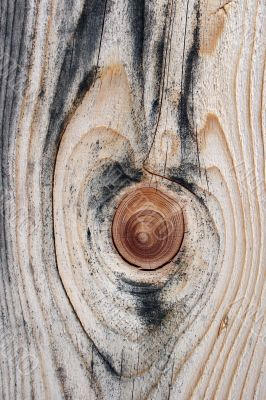 Beautiful knotty wood texture