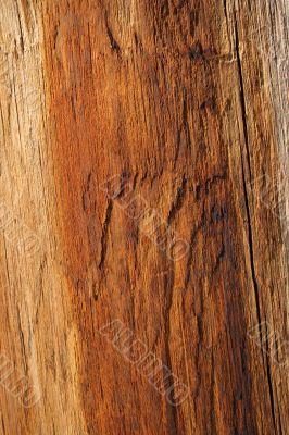 Wood texture of warm orange color