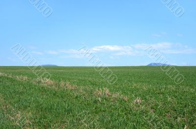 Spacious green field under the blue sky