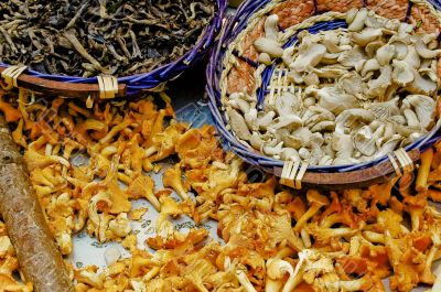 Gourmet Mushrooms in Rue Cler