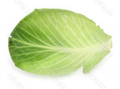 single cabbage leaf