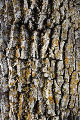 Mossy bark background