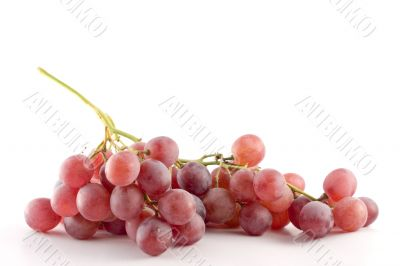 red grape on white