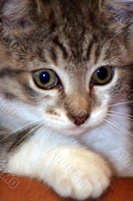 Trouble maker kitten