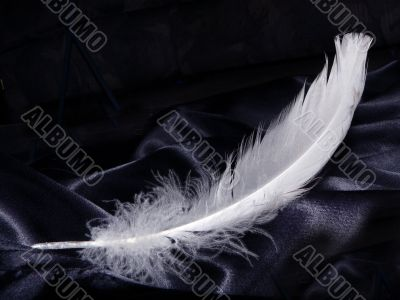 Pure White Feather