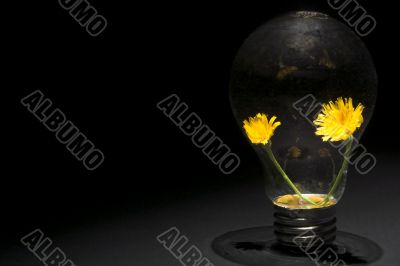 Dandelion Light Bulb