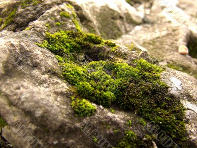 moss-grown stone