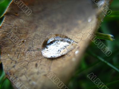 drop on dry leaf
