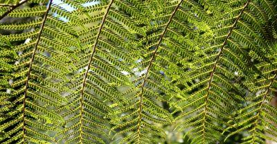 Rainforest Background 4