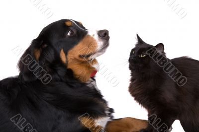 As cats and dogs