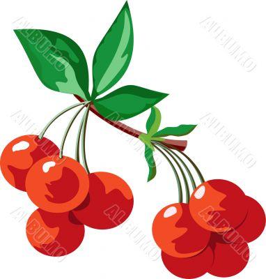 Red juicy