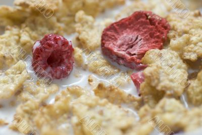 Corn flakes meal