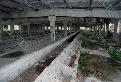 Deserted cattle-breeding a building