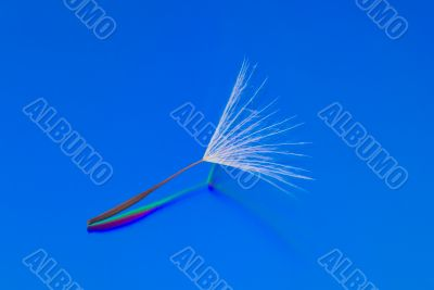 A Dandelion Seed on a Reflective Blue Background