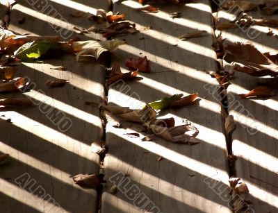 Autumn Shadows and Leaves