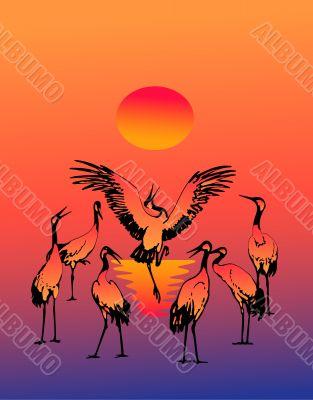 Dancing fine storks