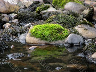 Green moss on a stone