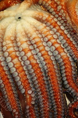 Close up of Octopus