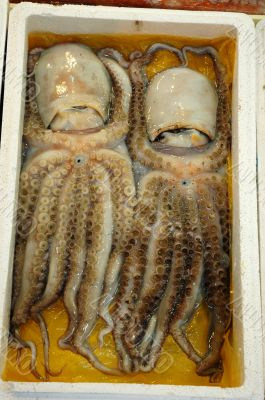 Octopus Twins