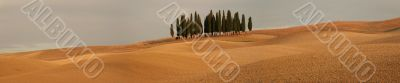 Panorama with cypress trees