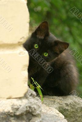 black kitten 2